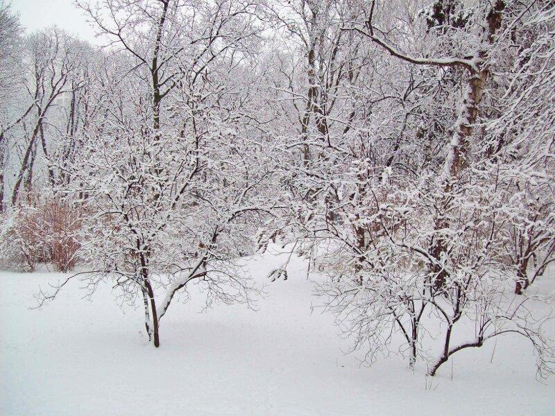 Кусты Мариинского парка под снегом