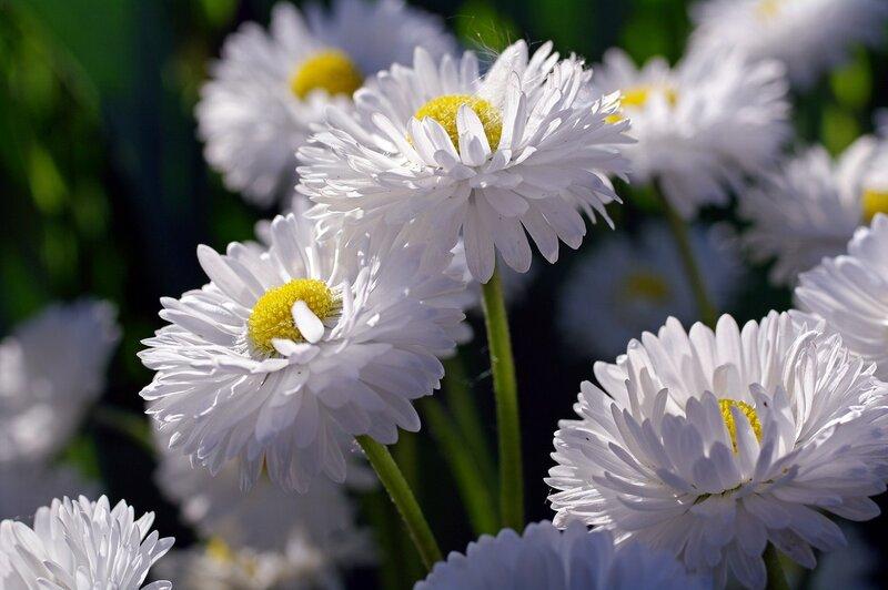 Жемчужины весны