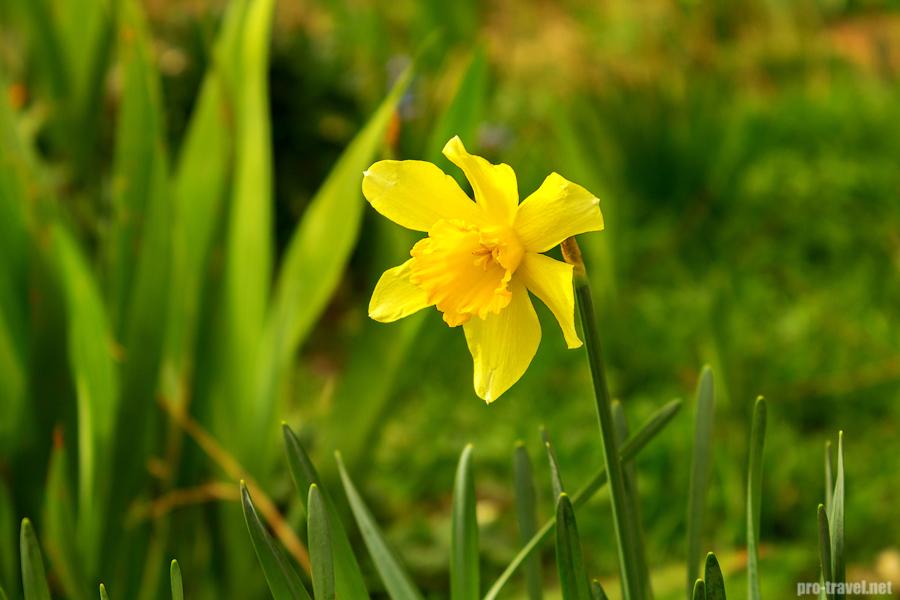 Весенние цветы в Крыму