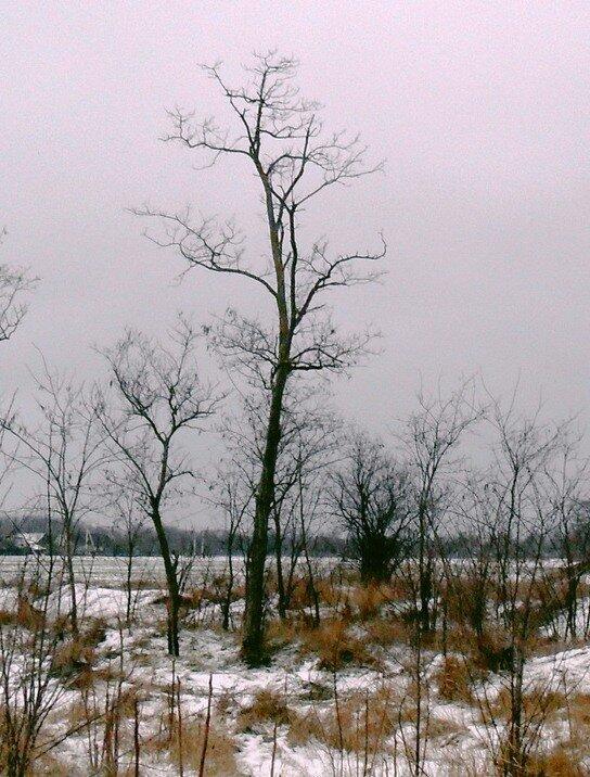 Узор в небе Зимы
