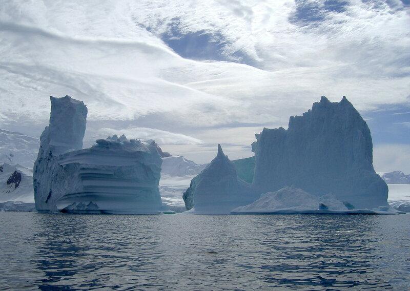 ЛЕБЕДИ антарктиды