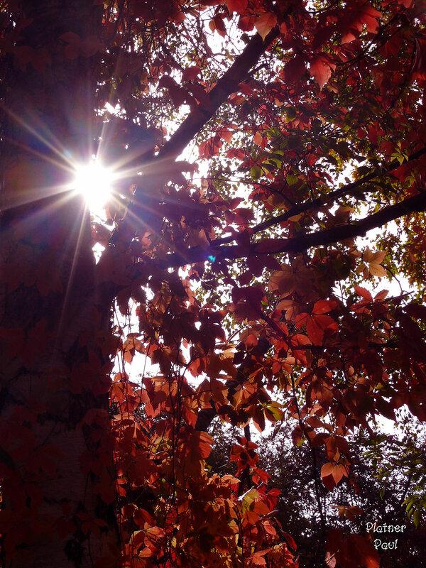 осень в красном....