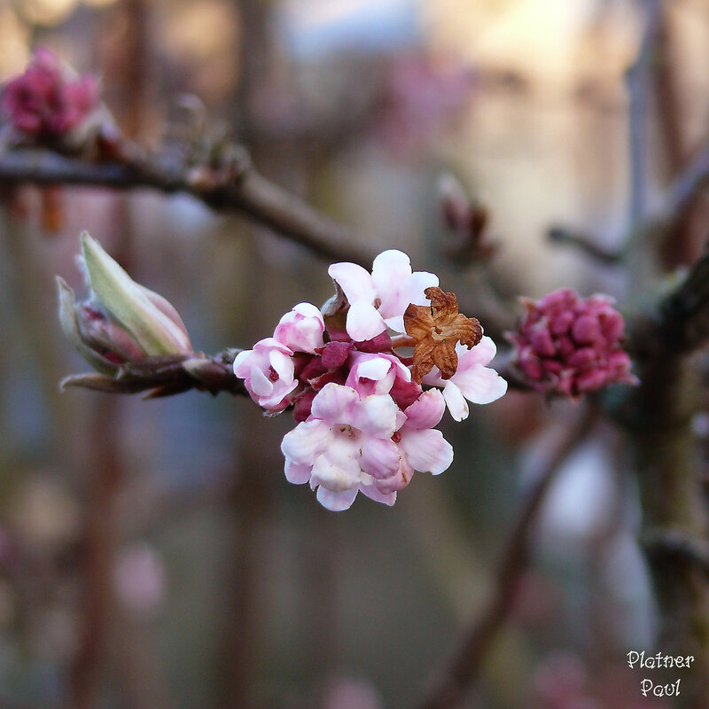 цветем, назло календарю))))