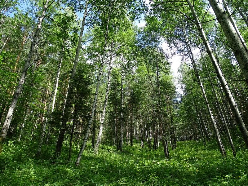 Бесконечный лес