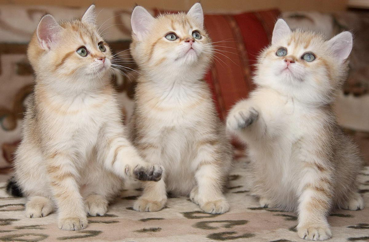 Три месяца жизни котят