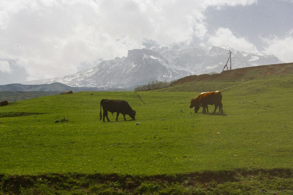 Дагестан-202.jpg