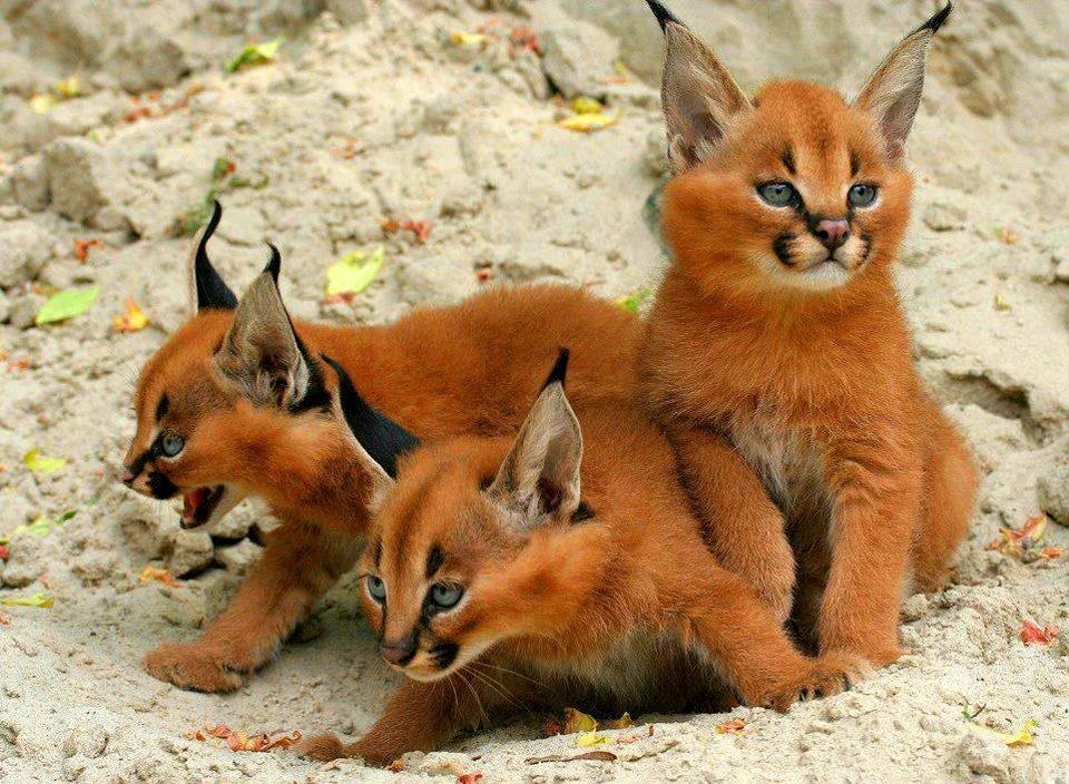 Котята, в которых невозможно не влюбиться