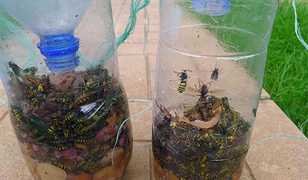 эффективные ловушки для любых насекомых своими руками