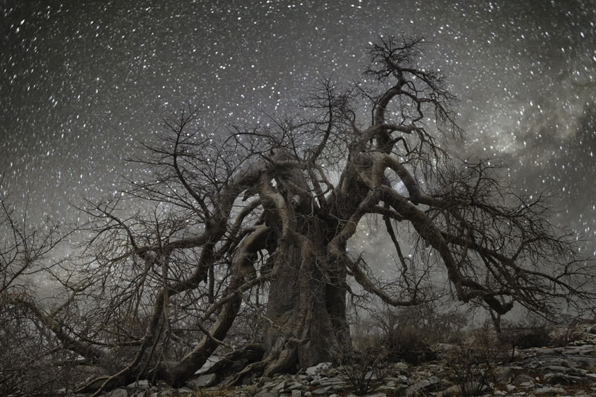 Diamond Nights: Africa's Oldest Trees Photographed Against Starry Night Skies by Beth Moon