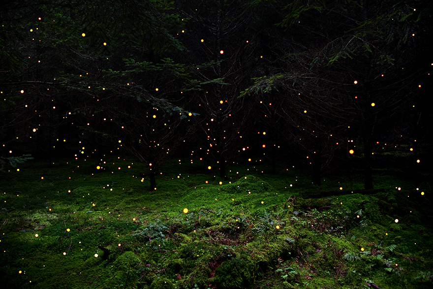 Ellie Davies ' studio is the forest, creating magical, fairytale-like stills throughout the UK.