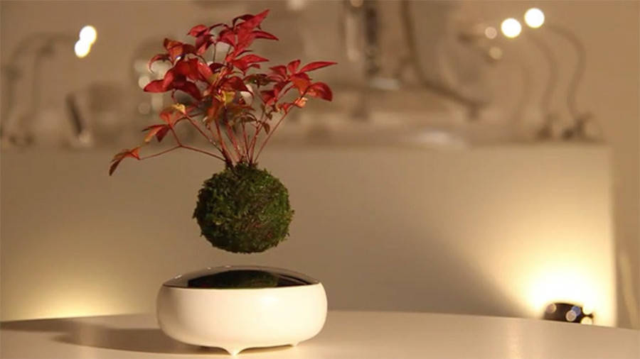 Floating Bonsai Tree