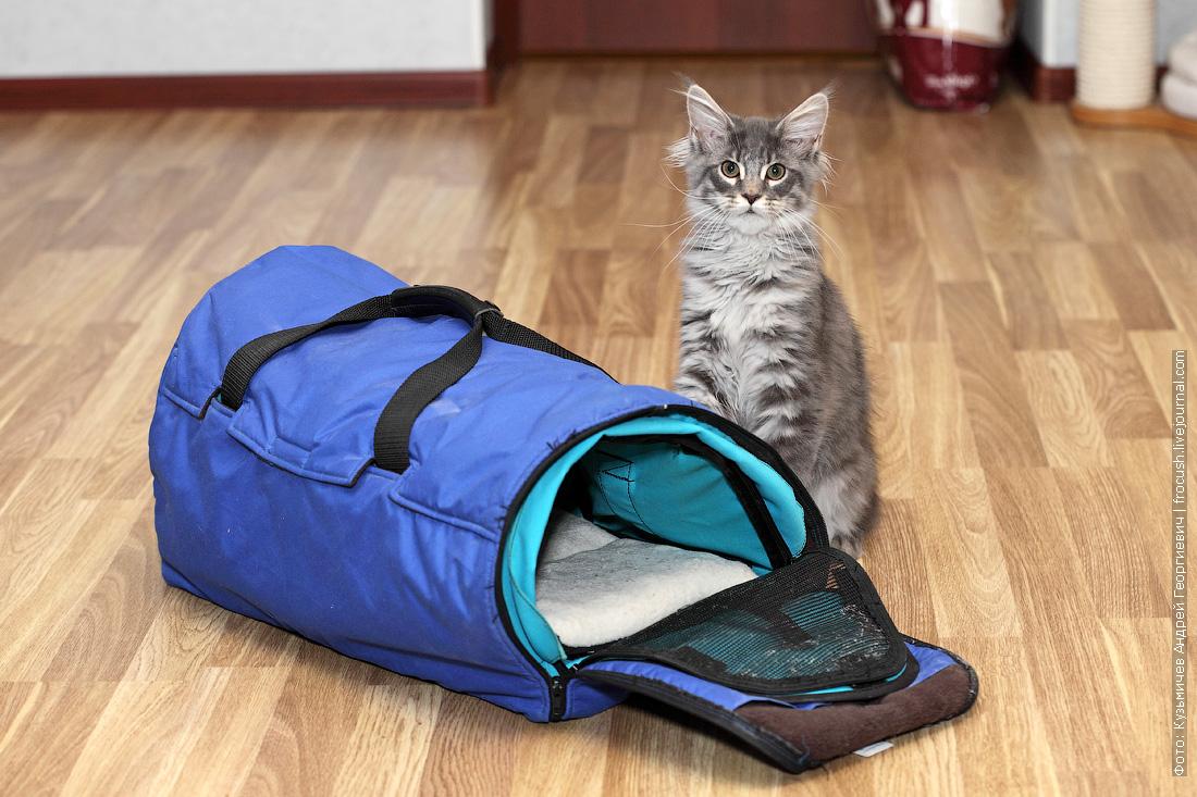 переноска для кота Мейн-кун