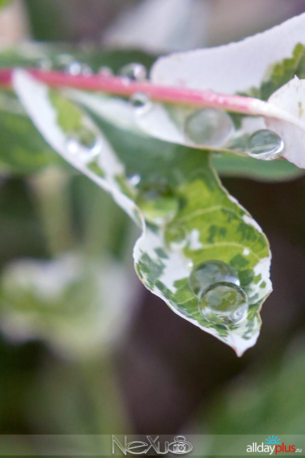 У природы нет плохой погоды, выпуск # 18 | Очарование упавших капель.