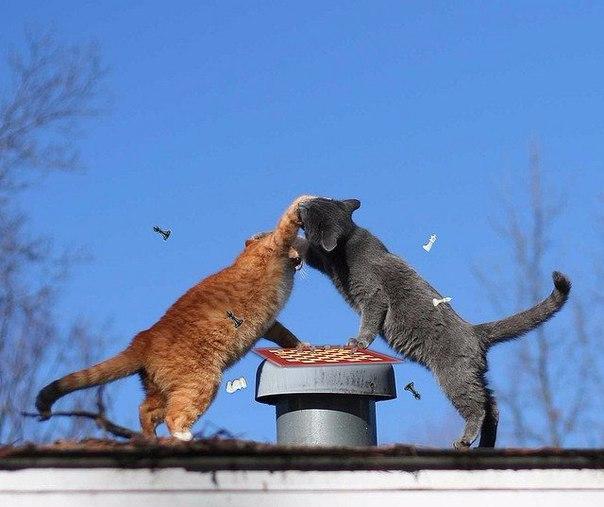 кошки-4.jpg