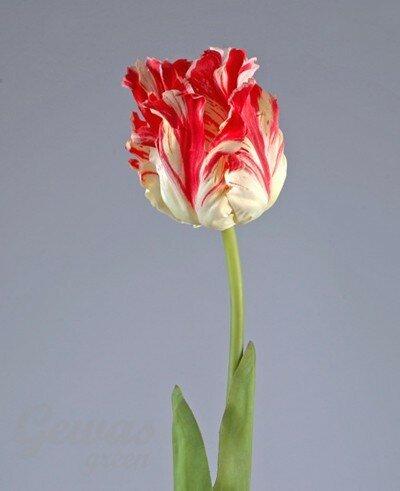 Весенние цветы-тюльпаны, подснежники и прочие... 0_14b610_8c0ba9d0_L
