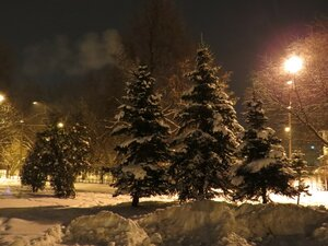 Заснеженные ели на набережной - Новый год в Великом Новгороде