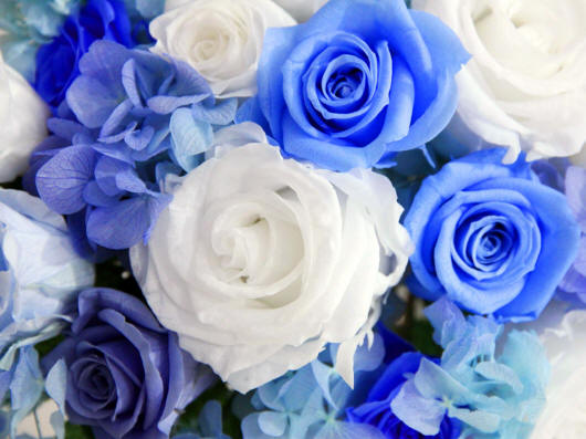 Троянди і гортензії