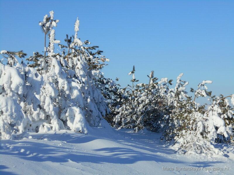Прогулка по склонам Вишневой горы, 11 января 2016 года