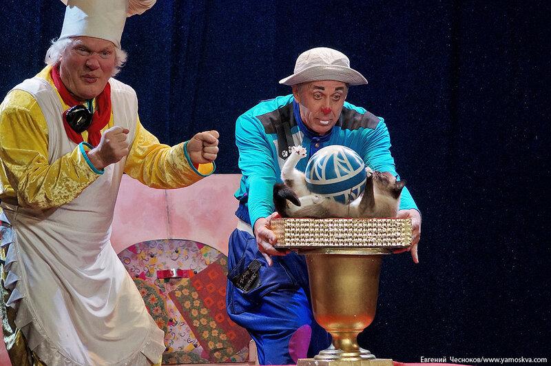Осень. Театр кошек. ДИНАСТИЯ. 15.10.15.42..jpg