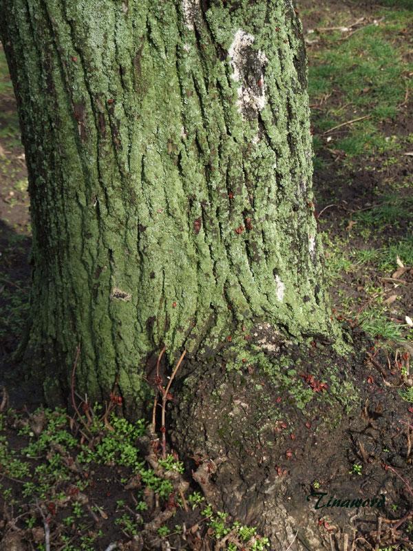 дерево-с-лиш-0.jpg