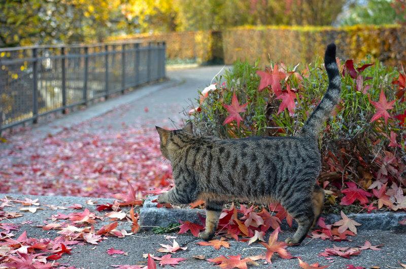 * Котэ идет в осень