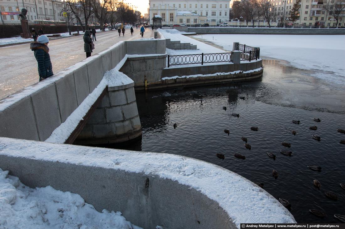 утки в Екатеринбурге на городском пруду