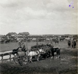 06. 1914. Стоянка гроховского полка в районе города Холм. 9 августа