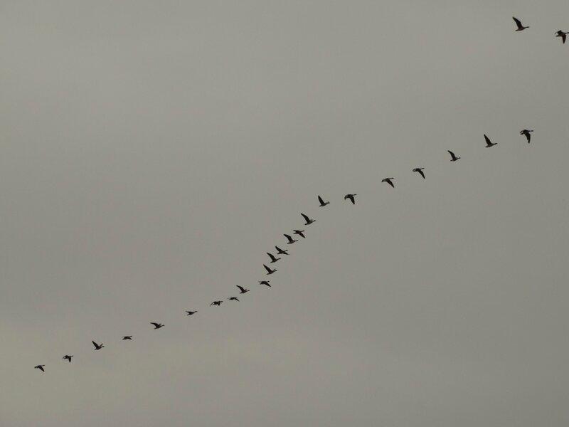 Летят перелётные птицы
