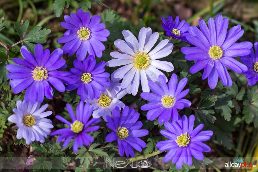 Я люблю все цветы, выпуск 213.