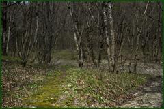 http://img-fotki.yandex.ru/get/27460/15842935.2ac/0_e23af_a733c27e_orig.png