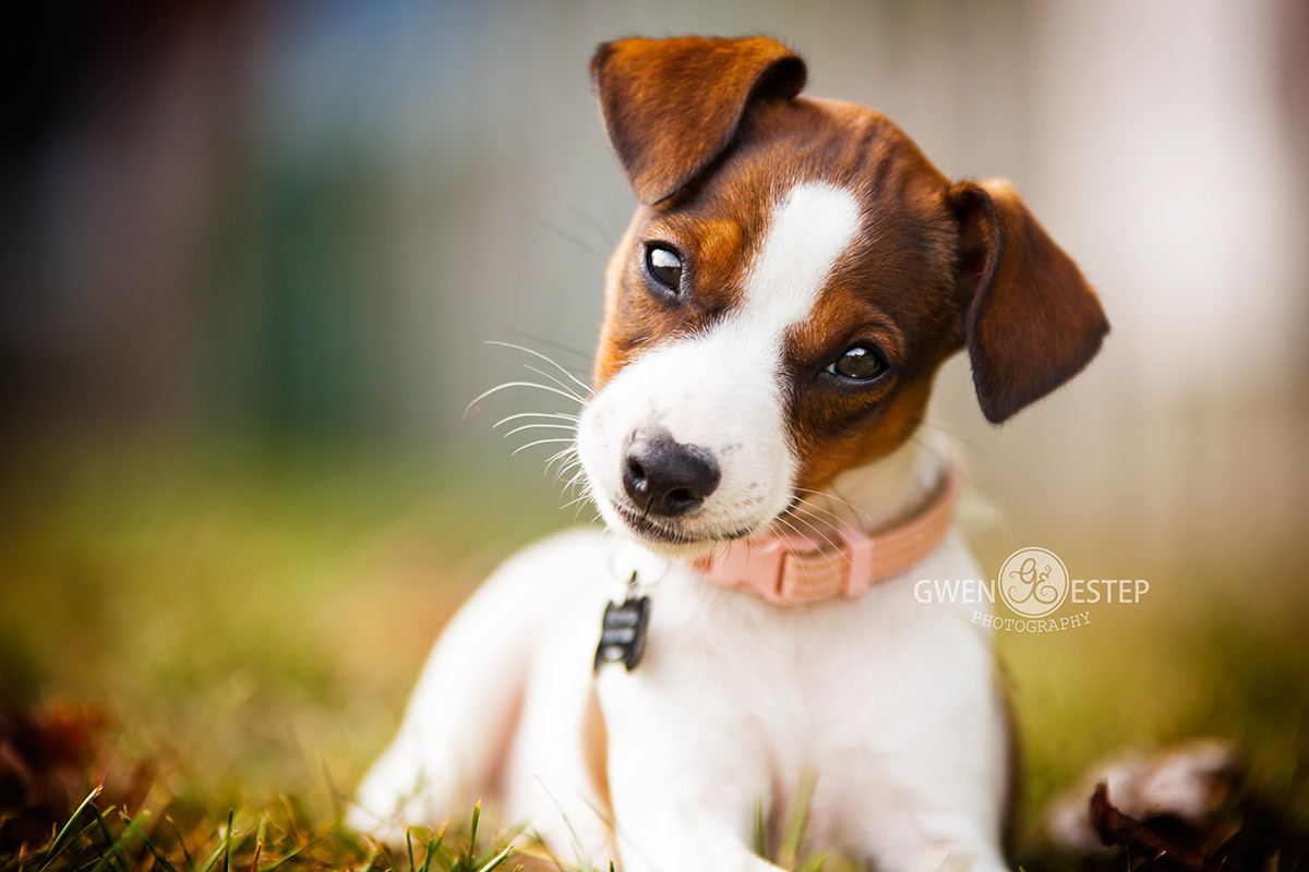 Собаки Gwen Estep