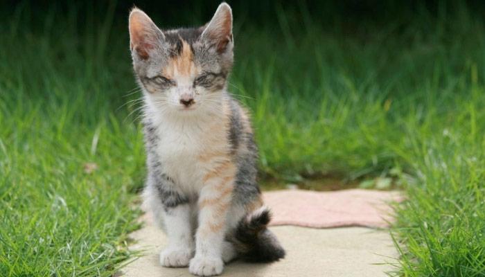 правильно ухаживать за слепой кошкой дома