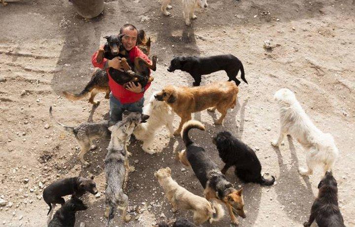 Он не смог найти свою потерянную собаку, но увидел множество жутких сцен убийства животных. Посл