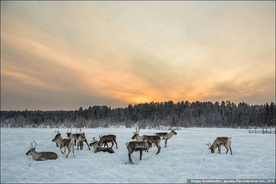 Возможно, вы удивитесь, но в начале зимы 1941 года на Карельском фронте из-за проблем с транспортным