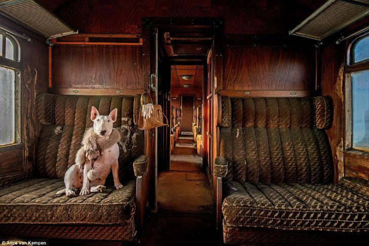 Фотограф Элис ван Кемпен сделала этот снимок в пустом поезде в Бельгии. В кадре ее бультерьер Клэр.