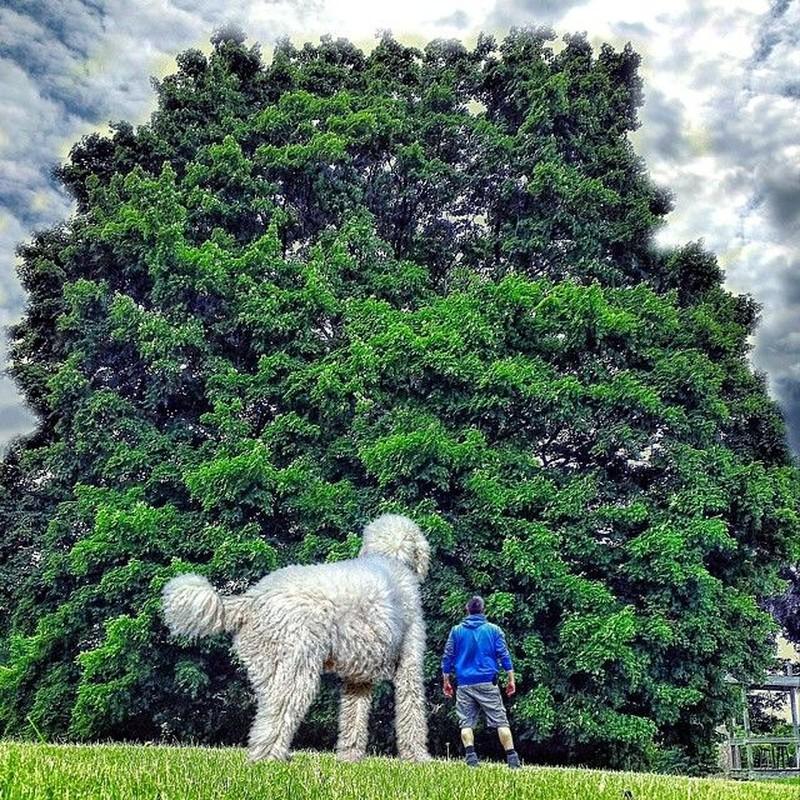 Роскошное дерево Кристофер с псом любуются громадным деревом.