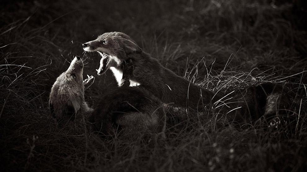 22. Arnfinn Johansen, Норвегия: еще одни борцы. (Фото Arnfinn Johansen | Sony World Photography