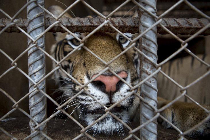 Тигриный монастырь (20 фото)