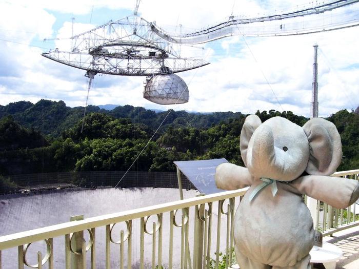 Слон узнал много нового о космосе в обсерватории Аресибо на острове Пуэрто-Рико.