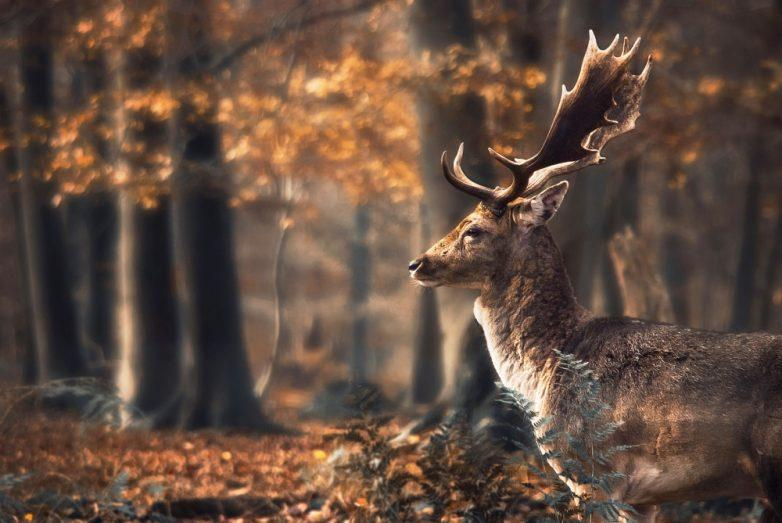 13. И хочется целый день бродить по лесу