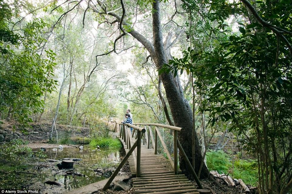 Мостик в Ботаническом саду Кирстенбош.