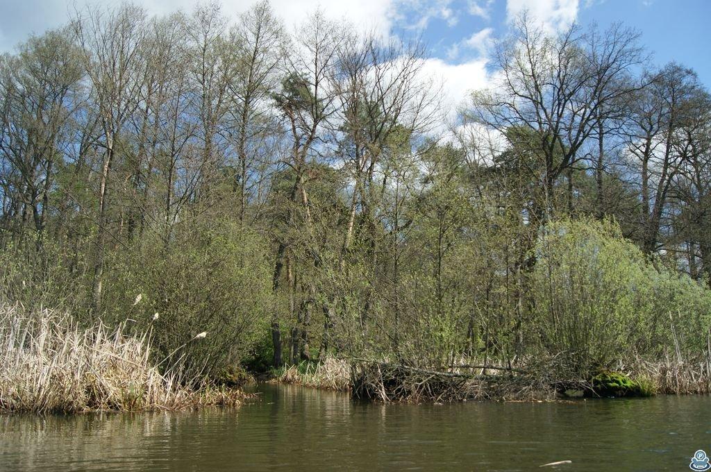 Деревья на берегу реки Боромля