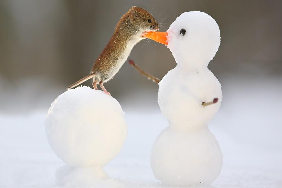 Вкусный снеговик