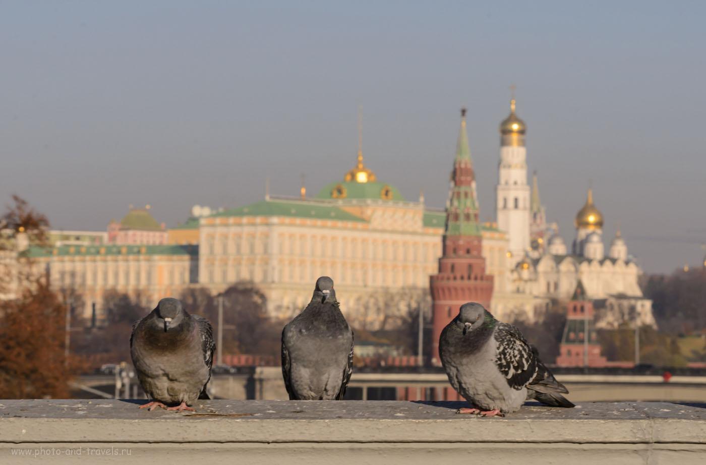 Фото 19. Голуби на Патриаршем мосту рядом с храмом Христа Спасителя в Москве. Отсюда открывается красивый вид на Кремль и на памятник Петру I. 1/160, -0.67EV, F/14, 100, 102 mm.