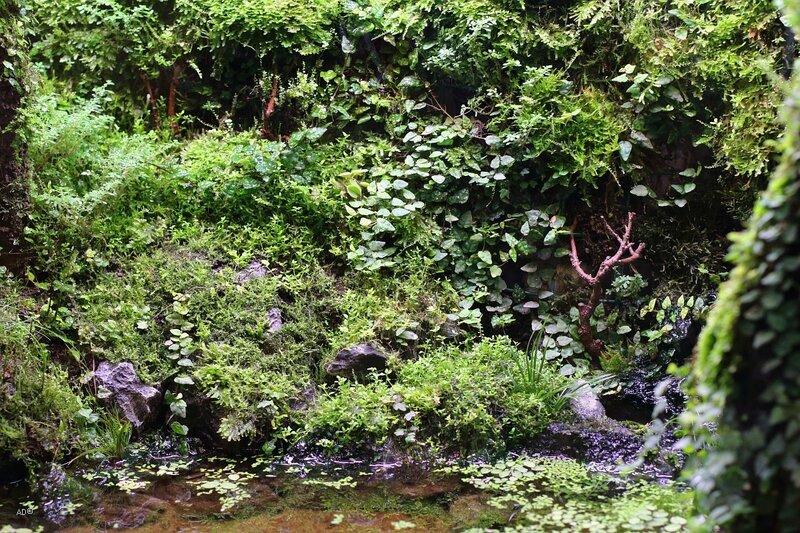 Мир джунглей в «Аптекарском огороде»