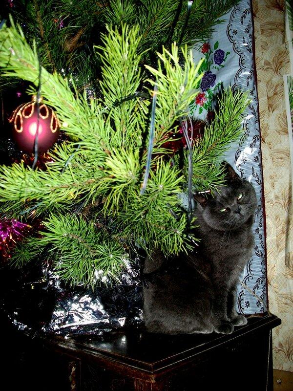 Кошка Бетси и елка