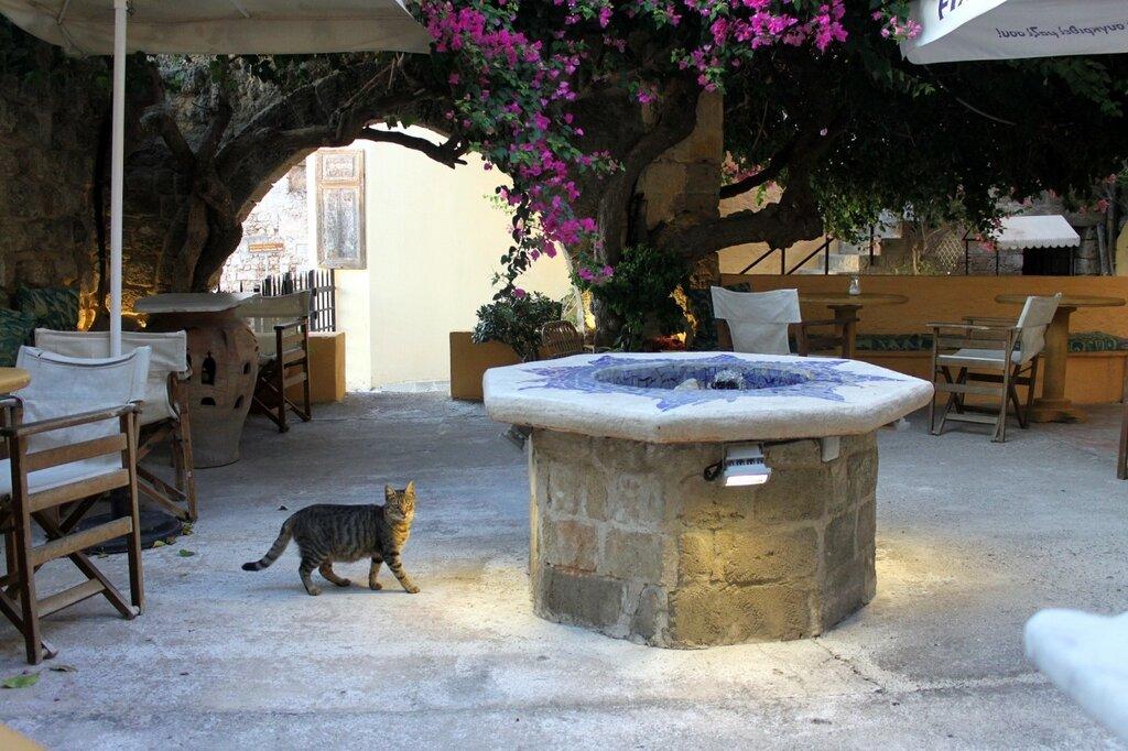 IMG_7773-Коты.jpg