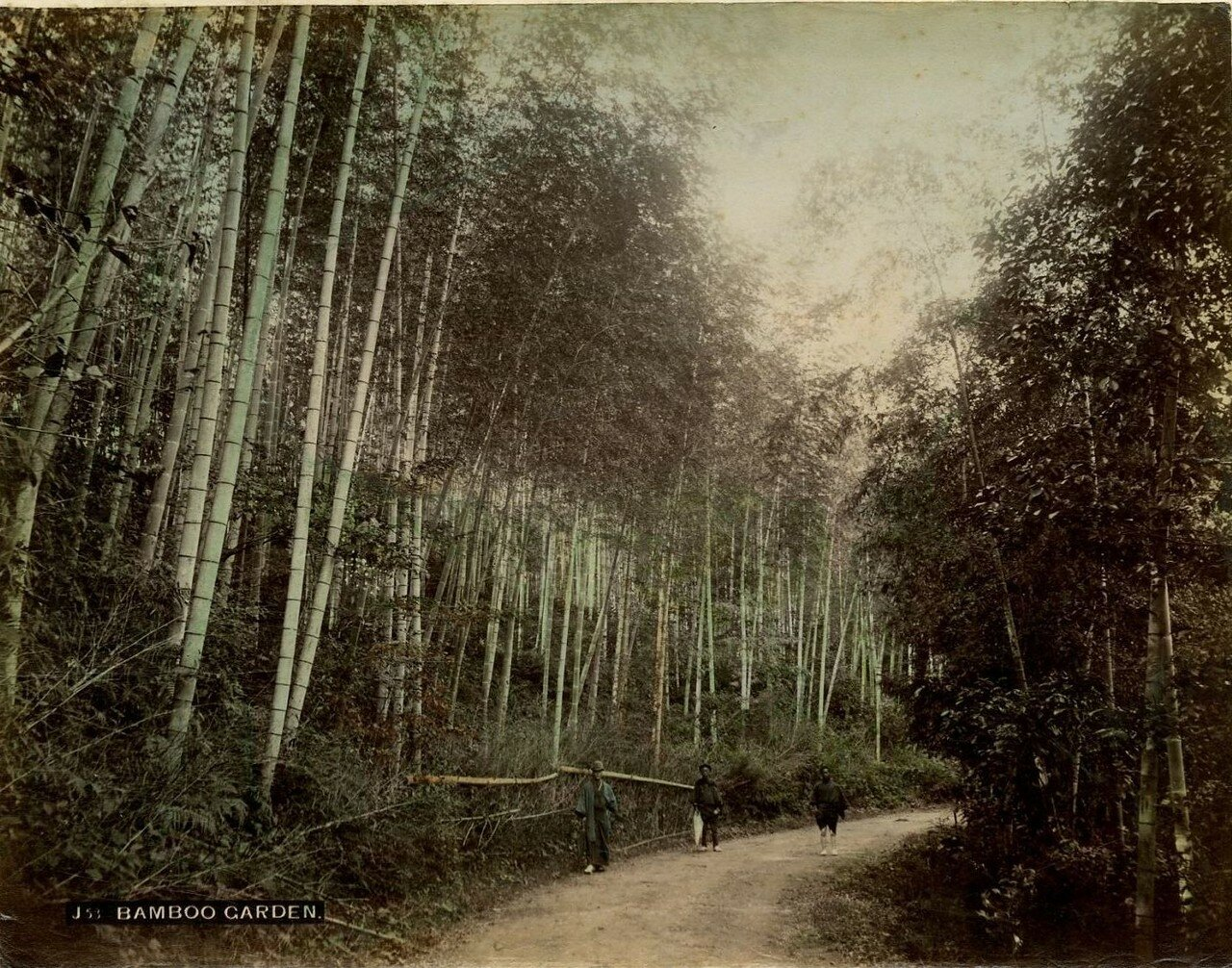 Бамбуковый сад