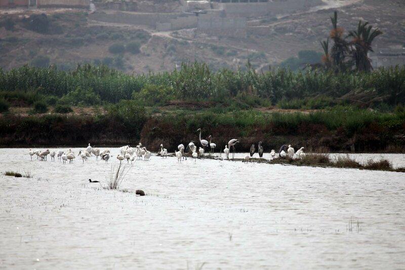 Марокко - птицы, фламинго