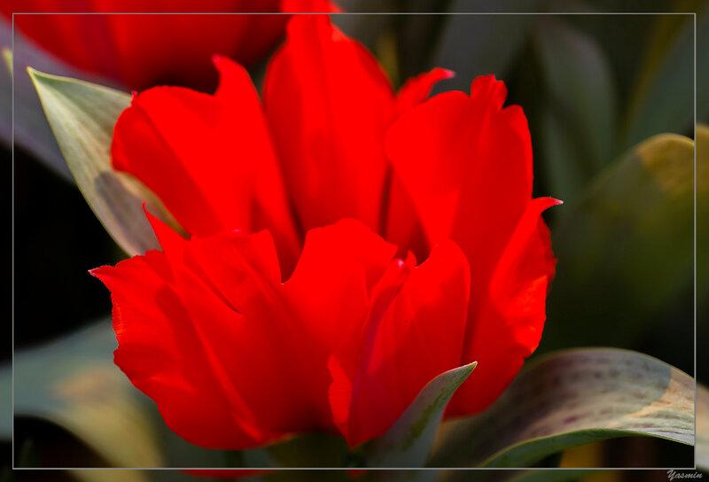 аптекарский, весна, репетиция весны, цветы